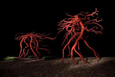 Steel Roots - MN Landscape Arboretum