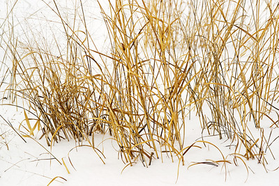 Winter's Grass
