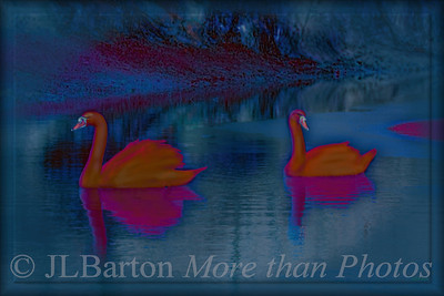 red swans just a bit of digital fun