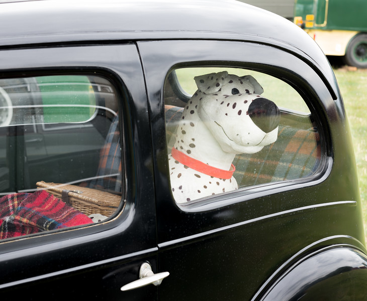 Dog in Car - Duncombe Park Steam Fair North Yorkshire UK
