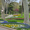 Pansies, grape hyacinths, tulips, redbud trees, plane trees,<br /> and other beautiful plantings in Istanbul's Gulhane Parki