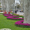 April is Tulip Time in Istanbul and especially in <br /> Gulhane Parki adjacent to Topkapi Palace.