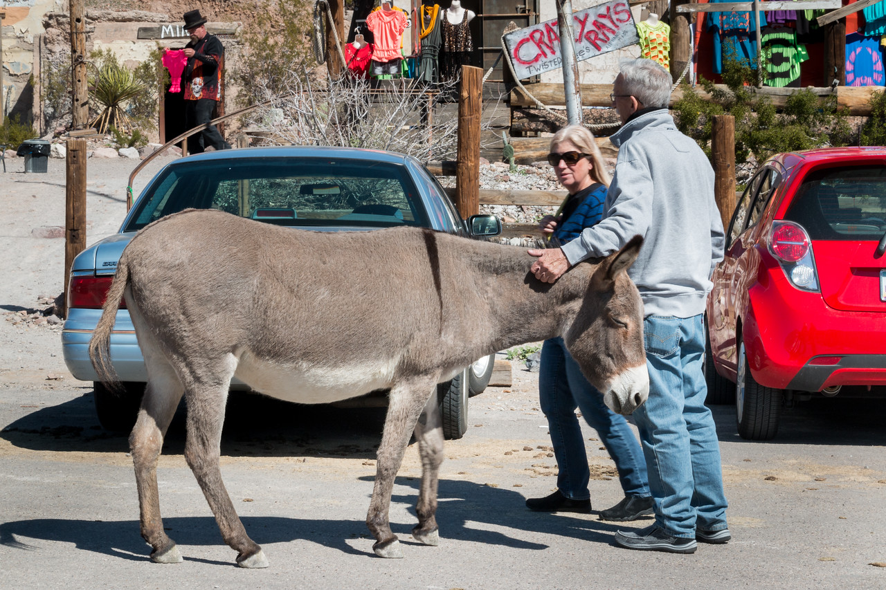 The burros are always happy to stop for a scratch.