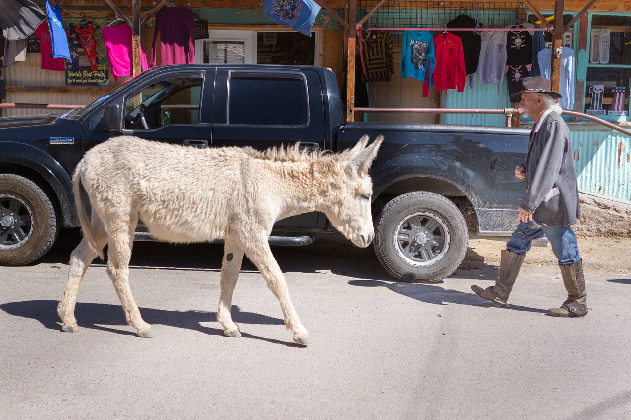 Two regular sights in Oatman, the burros and the costumed gunfighters.