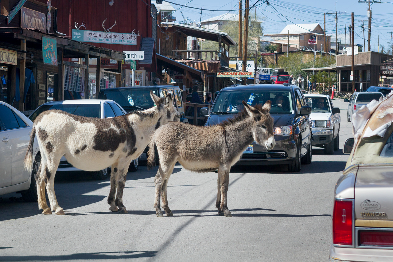 The burros rule so be prepared for mini traffic jams when they just stop in the middle of the street.