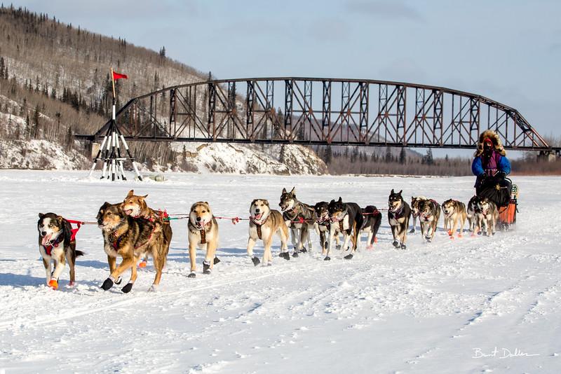 Iditarod 2015, Nenana