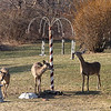 Caught in the act of robbing my feeders.<br /> Taken March 3, 2006