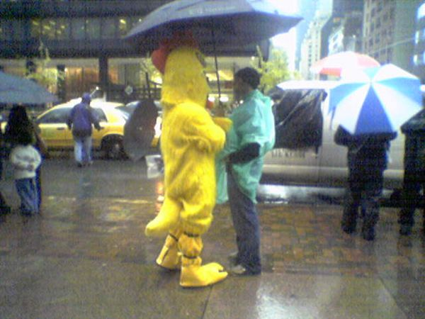 a guy in a chicken suit at 9 in the morning on 3rd avenue in the rain