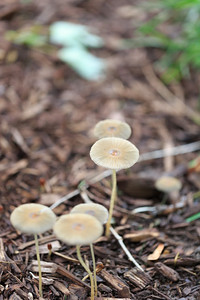 2014_05_25 Mushrooms 001
