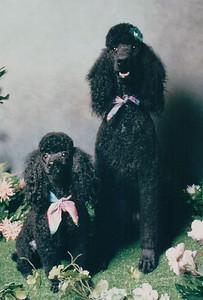 Henri &  Sasha 1993