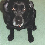 Kimi 1998