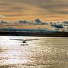 Yukon River Beavers