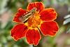 09-08-06-Backyard flower shoot 007-2