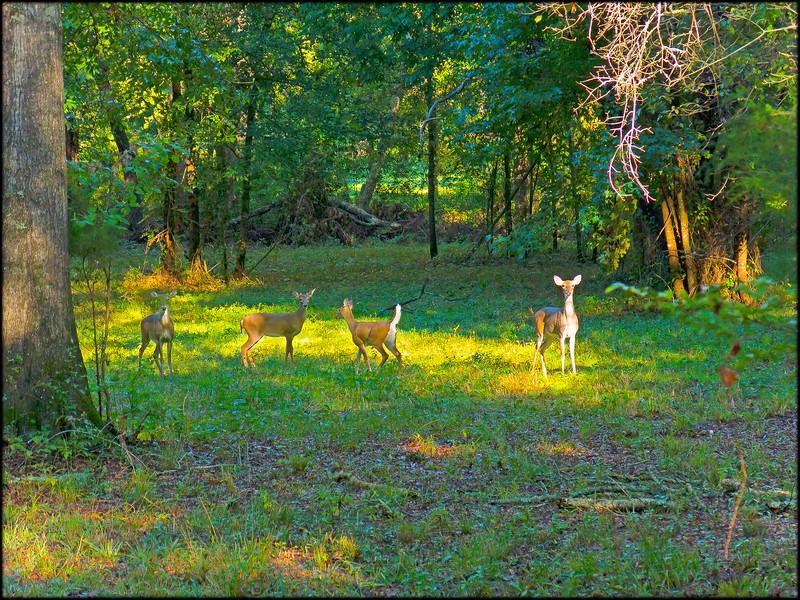 2013-10-17_Deer-copy