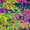 2020-11-07_MorningWalk_015-HDR
