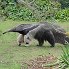 San Francisco Zoo,  <br /> Aug, 23, 2012