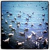 Birds on the Lake