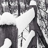 Fence with snow.