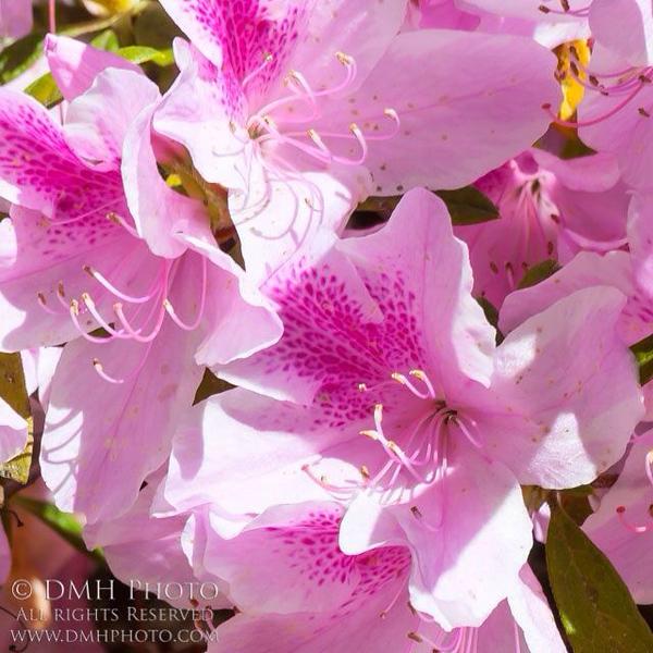 Beautiful flowers from Hilton Head, South Carolina.