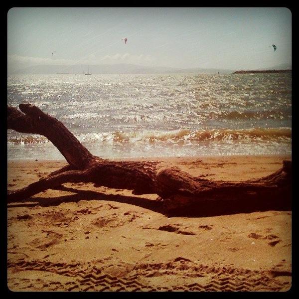 Log by the Ocean