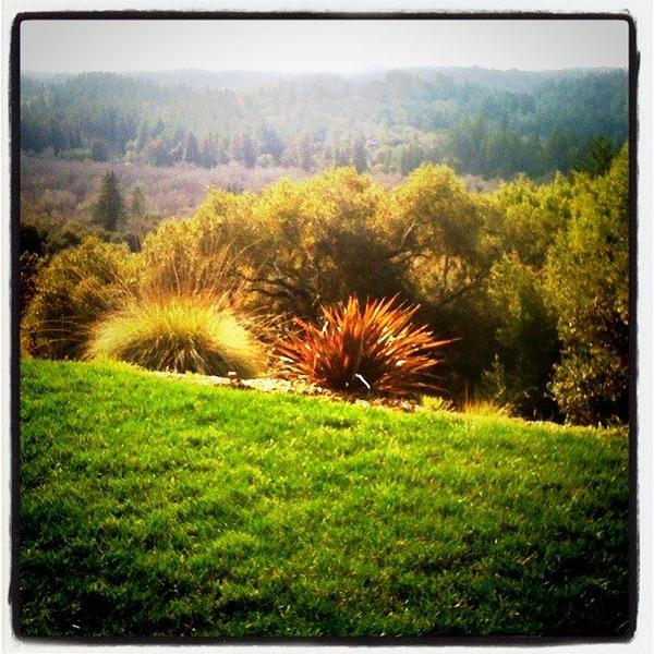 Hill Top in N. California