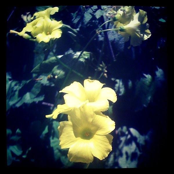 More Backyard Flowers