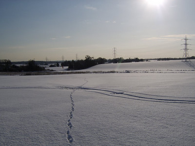 Snow at Plaistows Farm