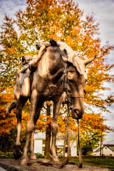 Civil War Cavalry Horse Sculpture, National Sporting Library & Museum, Middleburg, Virginia
