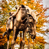 Civil War Horse Sculpture, National Sporting Library & Museum, 102 The Plains Road, Middleburg, Virginia