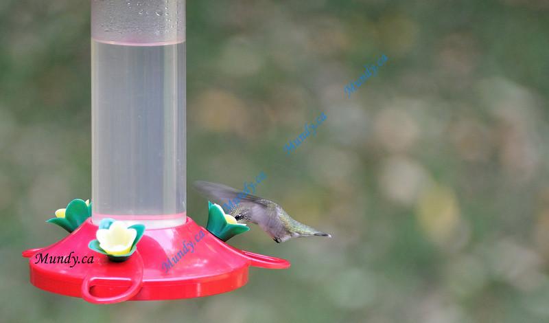 Just happened a hummingbird showed up ...