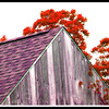red trees, purple barn