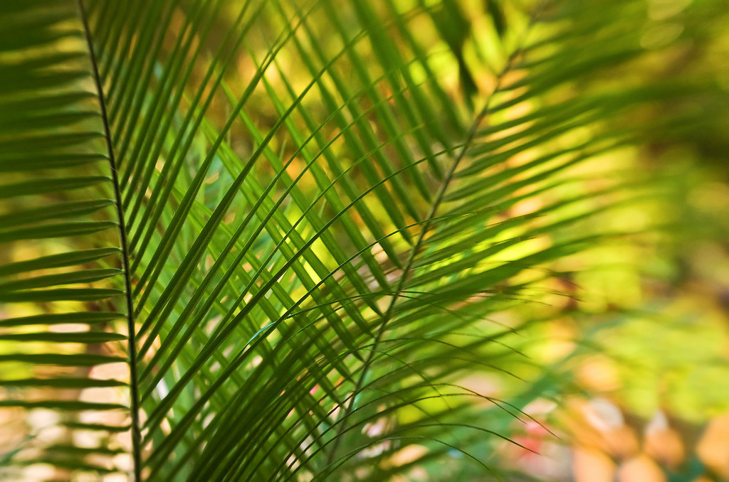 Fronds<br /> Lensbaby Work