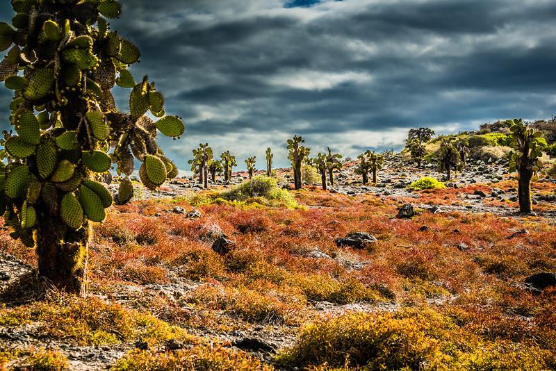Opuntia Landscape