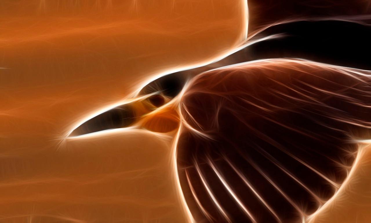 Dawn Flight  of the Night Heron
