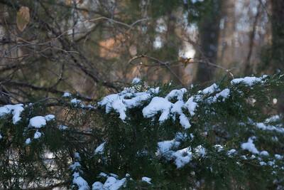 2013_12_25 Snowy Branch 001