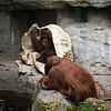 I don't know why orangutans love playing with burlap sacks, but they do.
