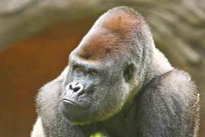 Atlanta Zoo 2007