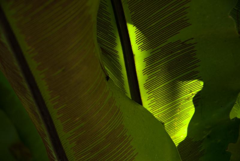 Leaf in Balboa Park, San Diego