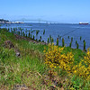 Waterfront and flowers, Astoria Oregon