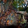 The  Pixey  tree .