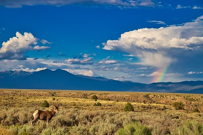 Big Horn and Rainbow