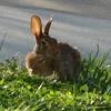 2008-06-02.bunny-02.jpg