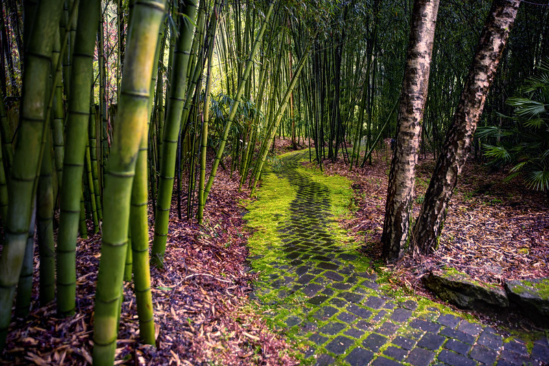 Bamboo Garden, Aptos, CA