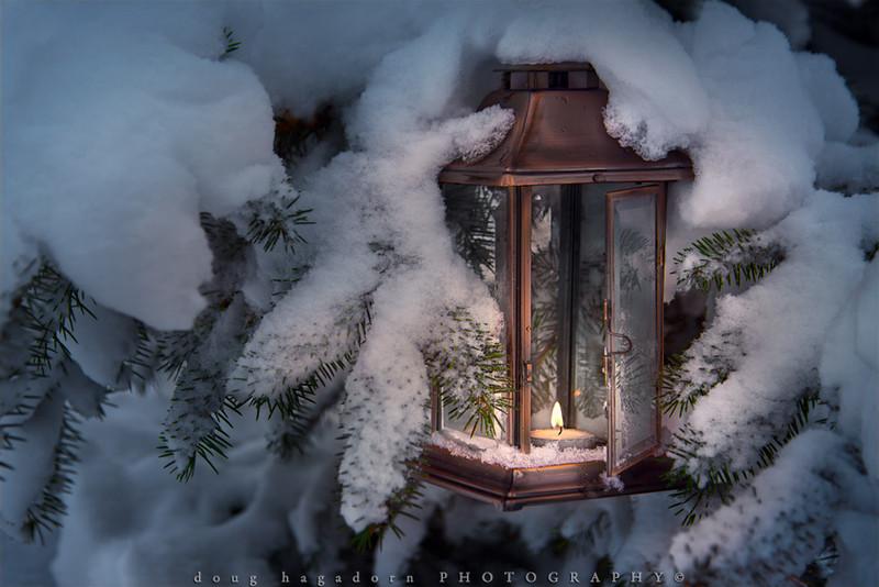 Lantern In A Tree (0379)