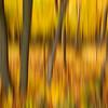 Golden Tree Motion Blur