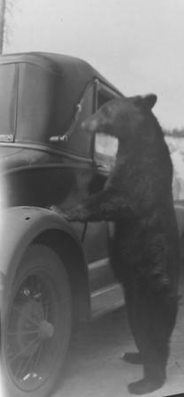 Da Bear. Yellowstone. Feeding the bears was common back then, and presumably allowed.