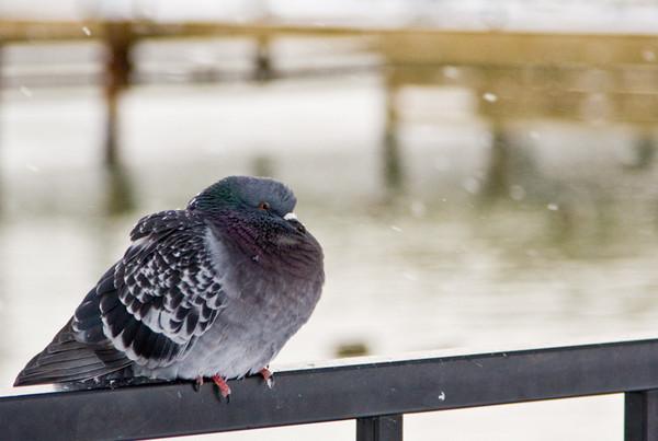 Frigid Feathery Friend