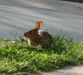 2008-06-02.bunny-01.jpg