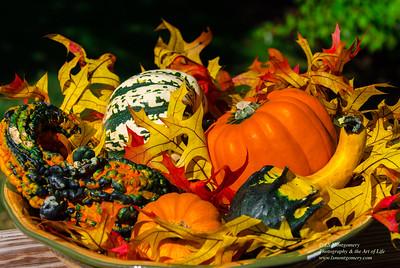 Bowl Full of Fall