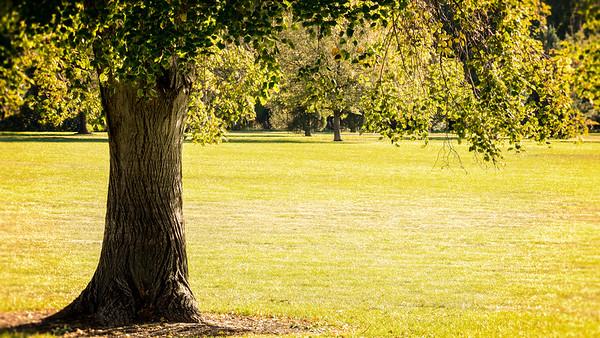 Sitting Tree